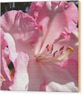 Floral Fine Art Prints Pink Rhodie Flower Baslee Troutman Wood Print