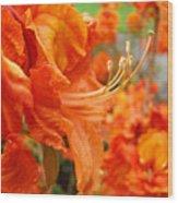 Floral Garden Art Prints Orange Rhododendrons Baslee Troutman Wood Print