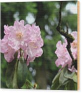 Floral Garden Pink Rhododendron Flowers Baslee Troutman Wood Print
