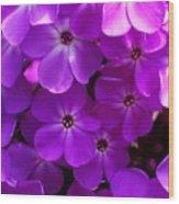 Floral Glory Wood Print