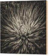 Floral In Sepia 1 Wood Print