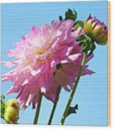 Floral Landscape Art Print Pink Dahlia Flower Blue Sky Canvas Baslee Troutman Wood Print