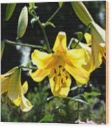 Floral Lilies Art Yellow Lily Flowers Giclee Baslee Troutman Wood Print