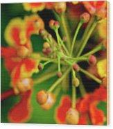 Floral Macro Wood Print