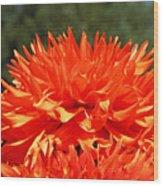 Floral Orange Dahlia Flowers Art Prints Wood Print
