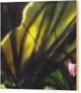 Floral Rays Wood Print