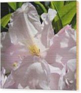 Floral Rhdodendron Flower Art Print Pink Sunlit Rhodies Baslee Wood Print