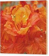 Floral Rhodies Art Prints Orange Rhododendrons Canvas Art Baslee Troutman Wood Print