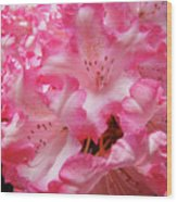 Floral Rhodies Flowers Pink White Art Baslee Troutman Wood Print