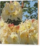 Floral Rhododendrons Fine Art Photography Art Prints Baslee Troutman Wood Print
