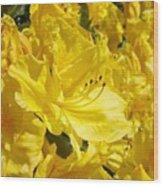 Floral Rhododendrons Garden Art Print Yellow Rhodies Baslee Troutman Wood Print