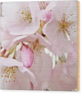 Floral Soft Pink Blossoms Spring Art Baslee Troutman Wood Print