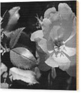 Floral Spotlight  Wood Print