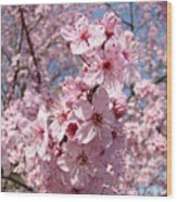Floral Spring Art Pink Blossoms Canvas Baslee Troutman Wood Print