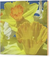 Floral Spring Garden Art Prints Yellow Daffodils Flowers Baslee Troutman Wood Print