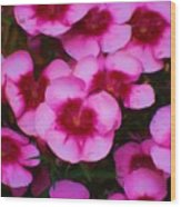 Floral Study In Red And Pink Wood Print