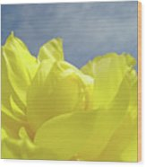 Floral Yellow Iris Flowers Blue Sky Baslee Troutman Wood Print
