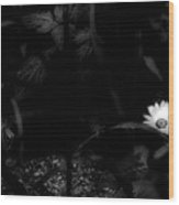 Floral Yellow Peek A Boo Bw Wood Print