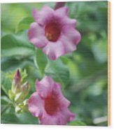 Flores De La Allamanda Wood Print