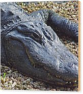 Florida Alligator Wood Print