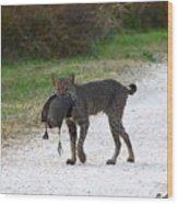 Florida Bobcat Catches An Evening Snack Wood Print by Barbara Bowen