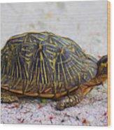 Florida Box Turtle Wood Print