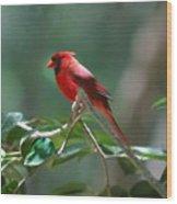 Florida Cardinal Wood Print