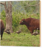Florida Cracker Cows And Osceola Turkeys #2 Wood Print