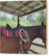 Florida Cracker Horse Wood Print