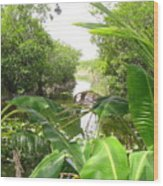Florida Everglades River Scene Wood Print