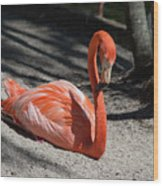 Florida Flamingo Wood Print