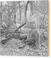 Florida Garden Scene_012 Wood Print