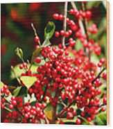 Florida Holly Berry's  Wood Print