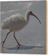 Florida Ibis 3 Wood Print