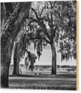 Florida Interior From Bok Gardens Wood Print