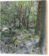 Florida Landscape - Lithia Springs Wood Print