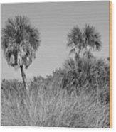 Florida Landscape Wood Print