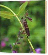 Florida Leaf-footed Bug Wood Print