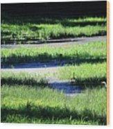 Florida Lines Of Latitude Wood Print