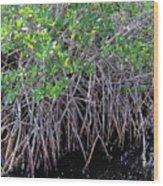 Florida - Mangroves Wood Print