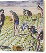 Florida Natives, 1591 Wood Print