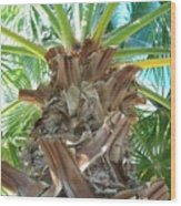 Florida Palm Wood Print