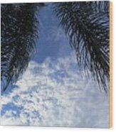 Florida Palm Fronds Blowing In The Breeze Wood Print