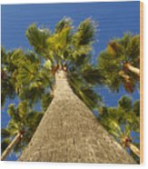 Florida Palms Wood Print