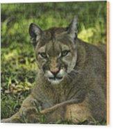 Florida Panther Agitated Wood Print
