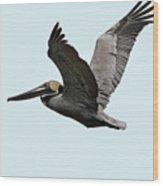 Florida Pelican In Flight Wood Print