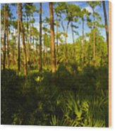 Florida Pine Forest Wood Print