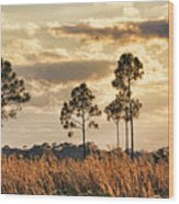 Florida Pine Landscape By H H Photography Of Florida Wood Print