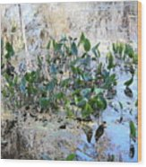 Florida Pond Wood Print