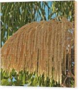 Florida Queen Palm Flower  Wood Print
